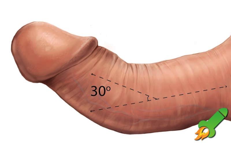 con pene curva di erezione)